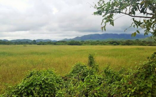 Cocle Raw Land for sale panama region panama realty 4